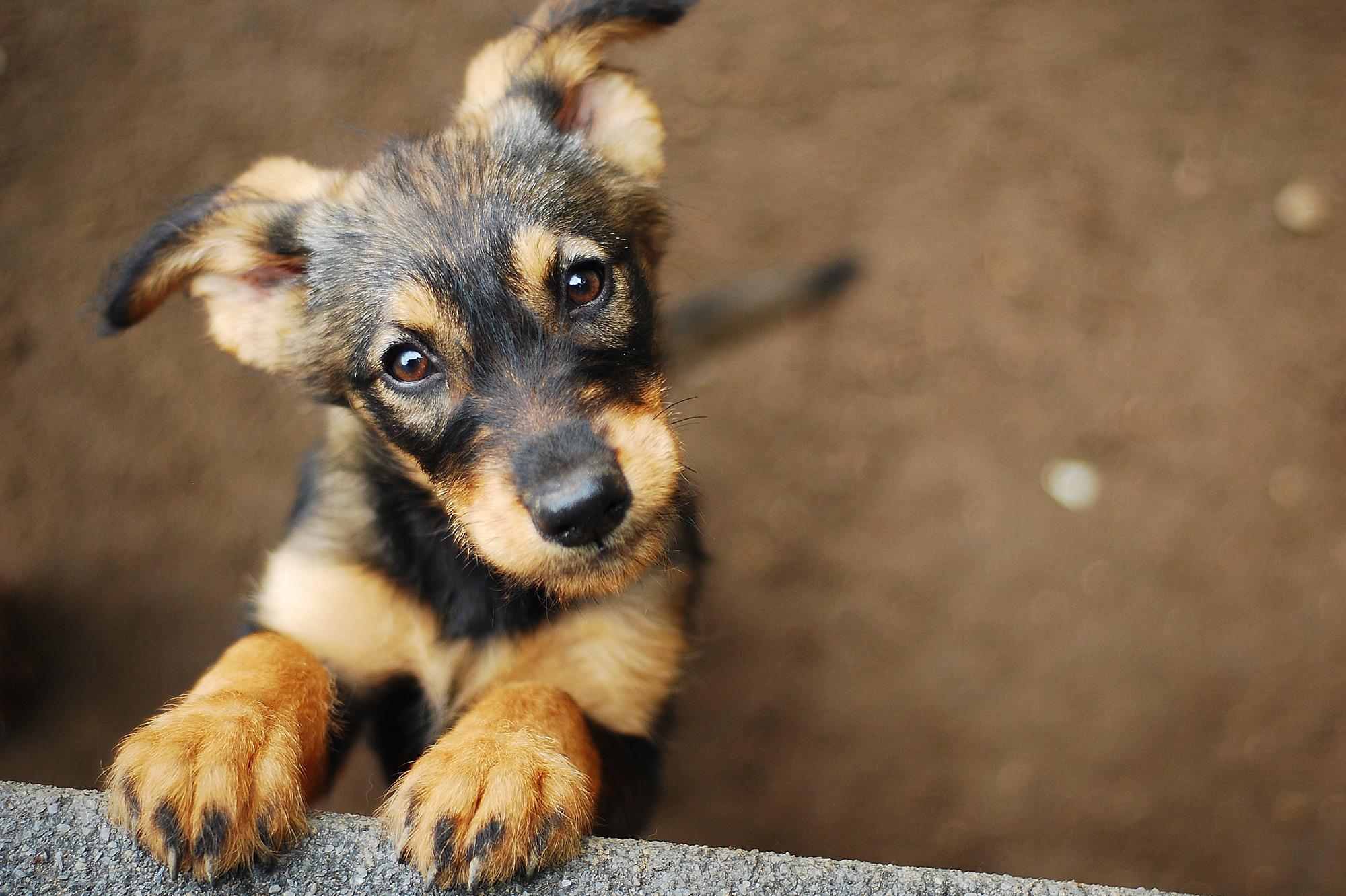 dog-shutterstock