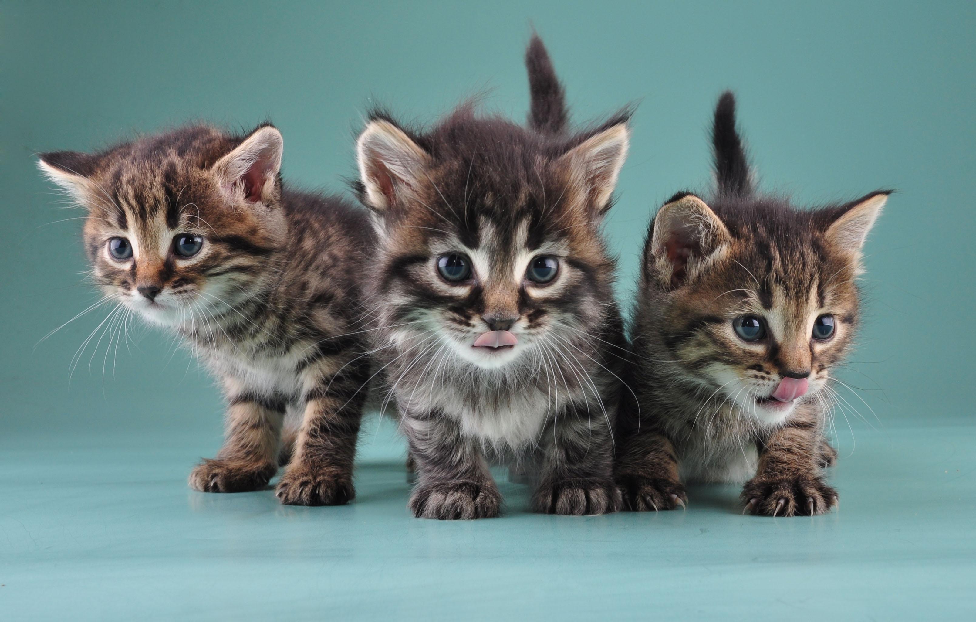 international-cat-day